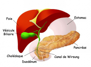cancer-pancreas